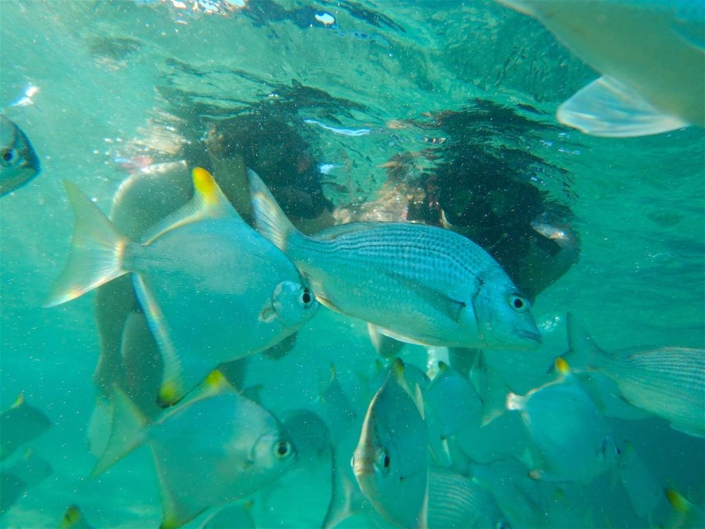 Snorkeling at Wave Break Island